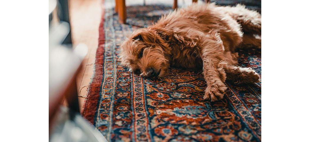 Wnętrze przyjazne dla zwierząt - dywany do prania w pralce