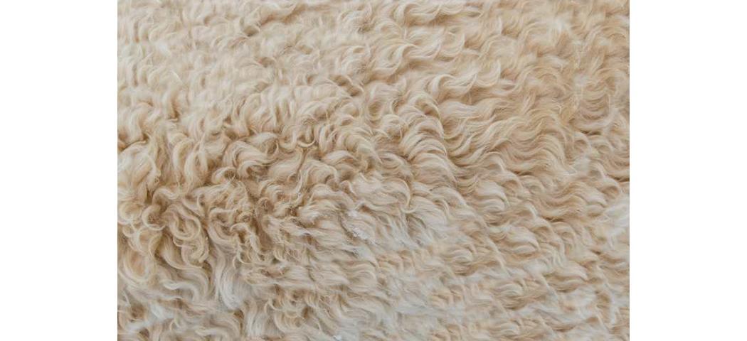 Jak poznać, że dywan jest z wełny 7 królestw dywanów